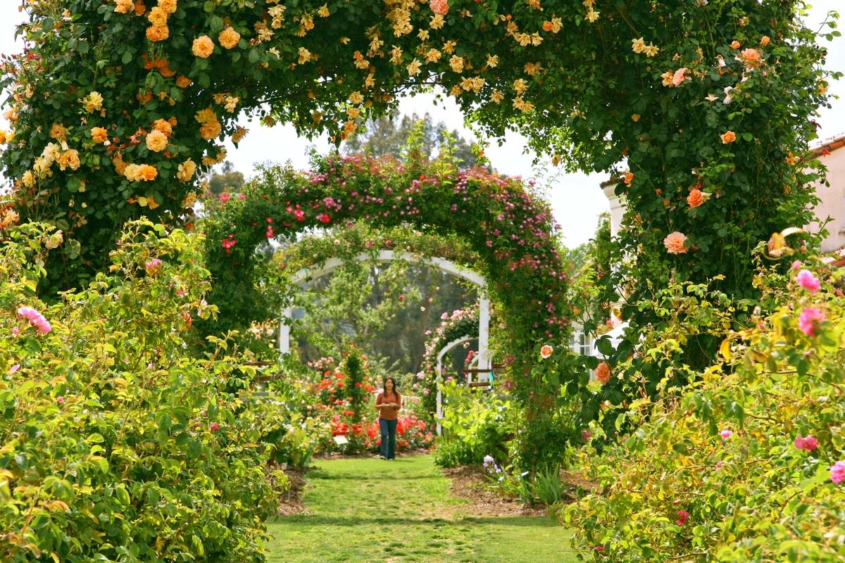 Garden Allee MK IMG_0501JPG