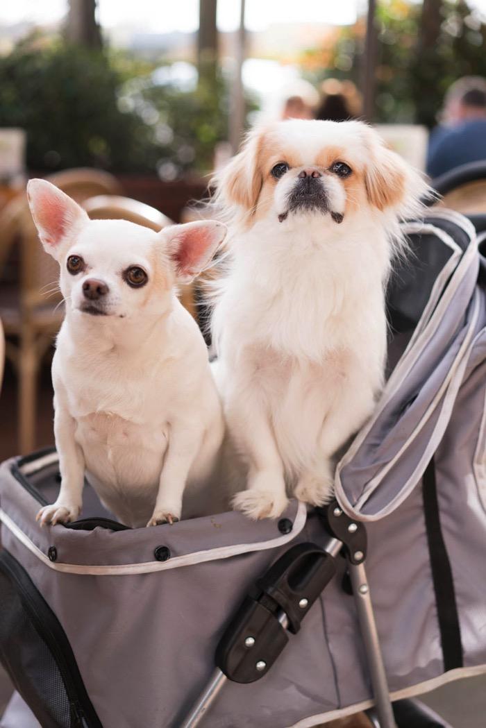 Savannah & Louie