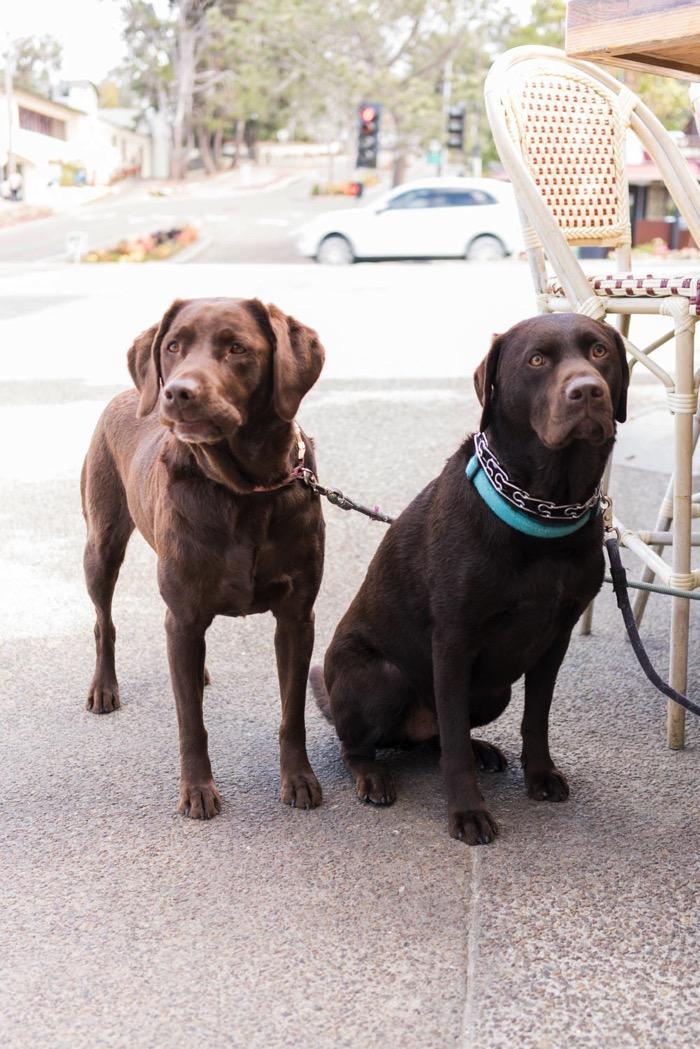 Beatrix & Rupert