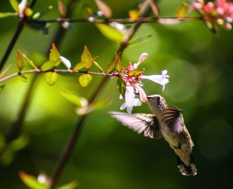 Fuchsia | ROBERT PICK