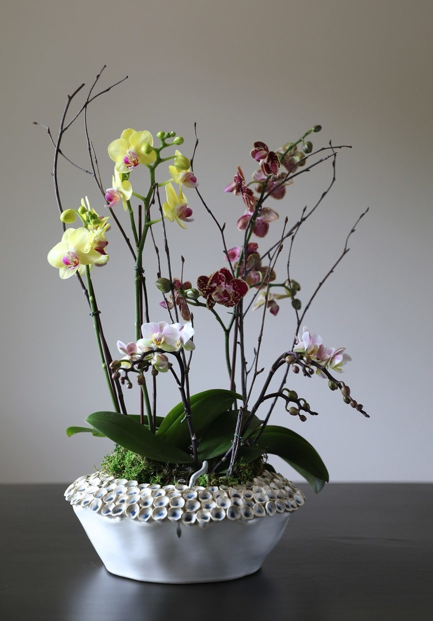 Mixed Colors | Mini Phalaenopsis Orchids, three different colors in a barnacle vase