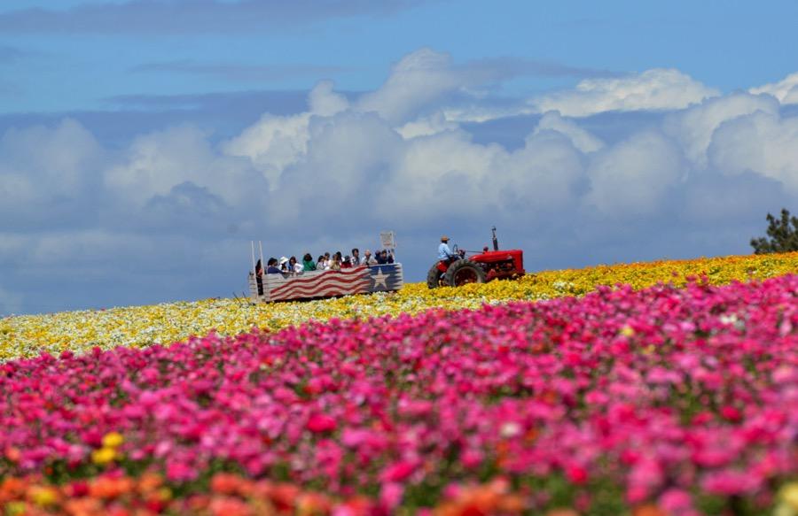KRISTINA REBELO / THE FLOWER FIELDS  |  The Flower Fields
