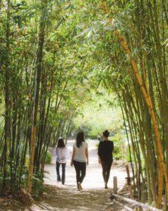 SDBG-Bamboo garden2_atm_40