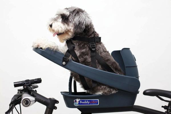 Pets - Buddy Rider _sml